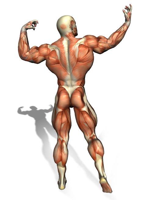 Freefitnessguru Shoulder Exercises