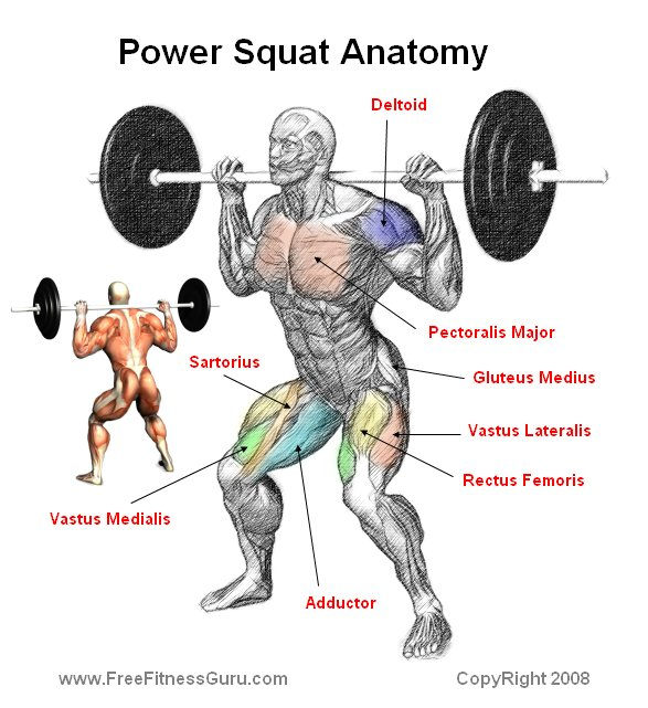 Prime Freefitnessguru Power Squat Anatomy Gmtry Best Dining Table And Chair Ideas Images Gmtryco