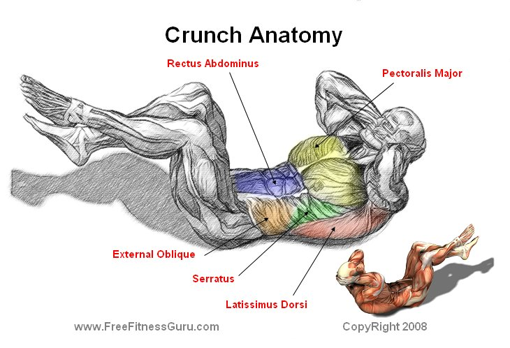 FreeFitnessGuru - Crunch Anatomy