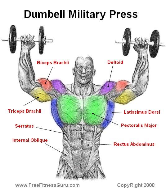 FreeFitnessGuru - Dumbell Military Press Anatomy