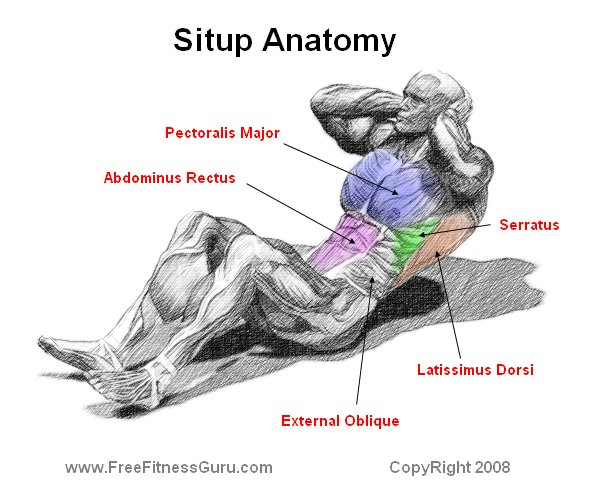 FreeFitnessGuru - Sit up Anatomy