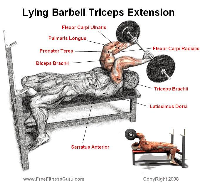barbell lying triceps extension skull crusher 2016 car