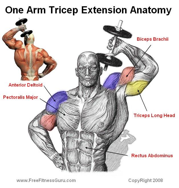 FreeFitnessGuru - One Arm Tricep Extension