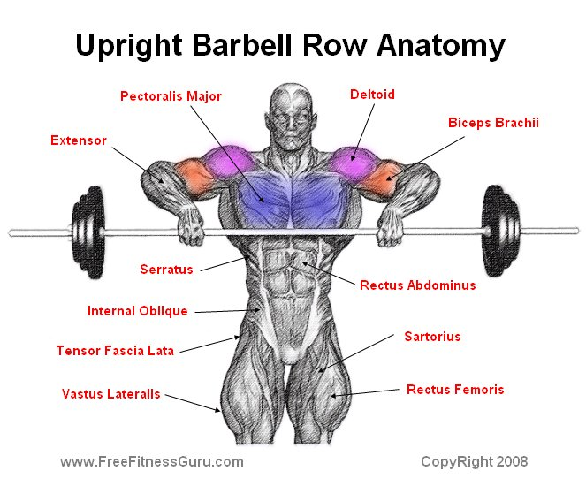 barbell row muscles worked - photo #3