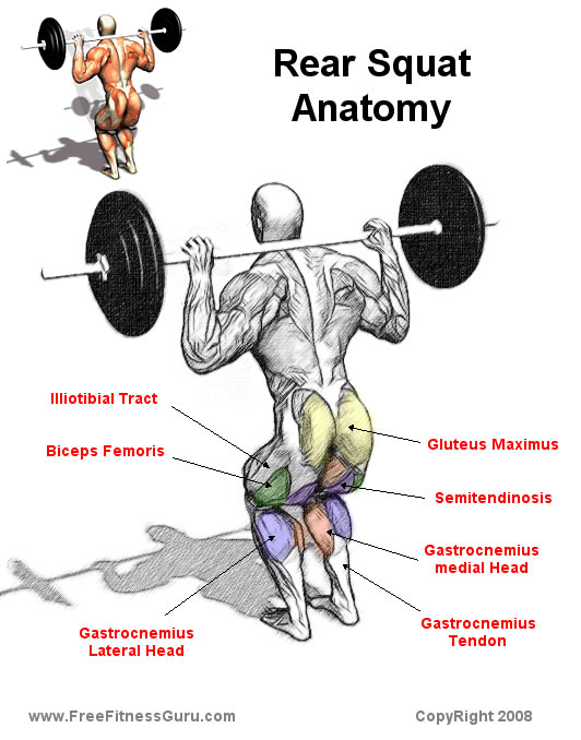 Rear Squat Anatomy